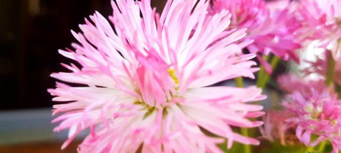 Les fleurs de mai